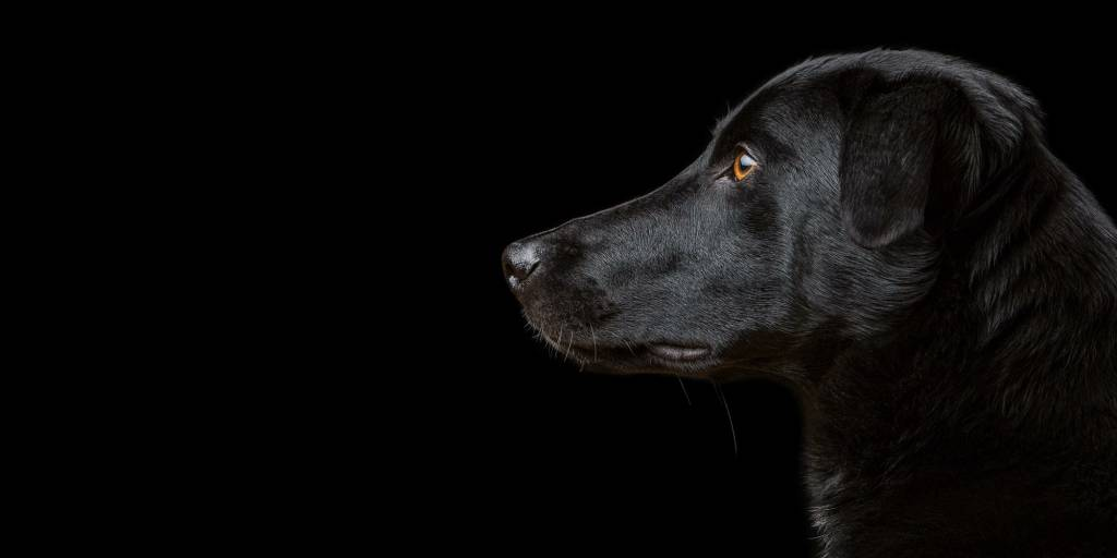 Dog Portrait Photography by Mark Hewitson Photography