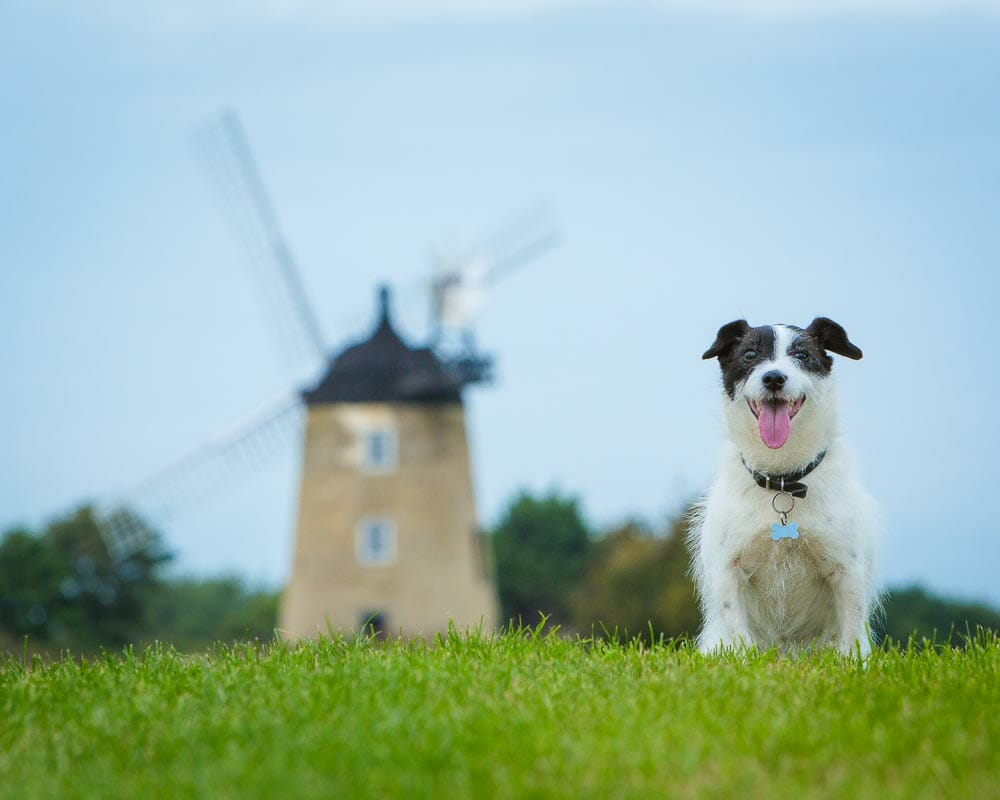 Dog Portrait Photography in Thame by Mark Hewitson Photography of Thame