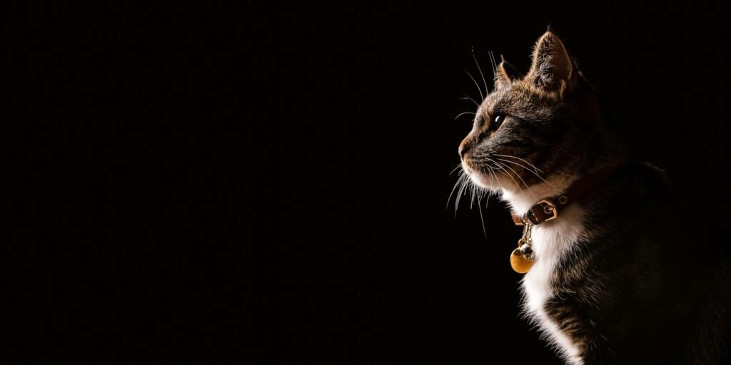Cat Portrait Photography by Mark Hewitson Photography of Thame, Oxfordshire
